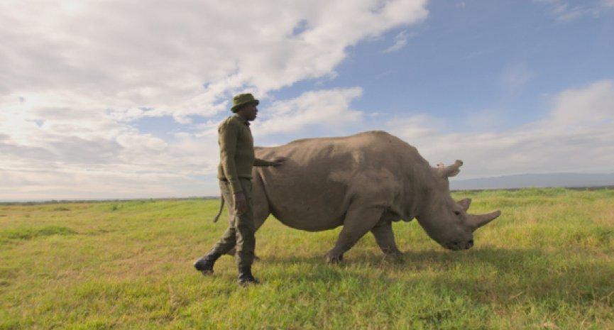 BBC Earth《地球生态季》掀起现代绿色革命!《灭绝的真相》揭100万濒危物种