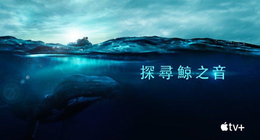 赏鲸季开跑!Apple TV+纪录片《探寻鲸之音》带你听见鲸鱼歌唱